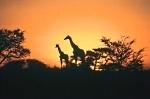 Lua de mel em África