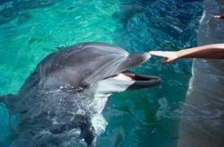 Passeios com golfinhos