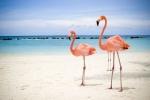 Aruba nas Caraíbas já tem site em Português